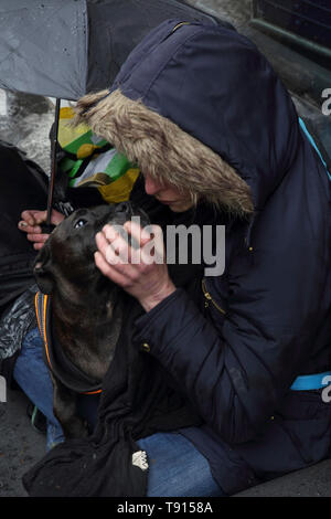 Glasgow Scotland Homeless Woman with her Staffordshire Bull Terrier Dog in the Rain - Stock Photo