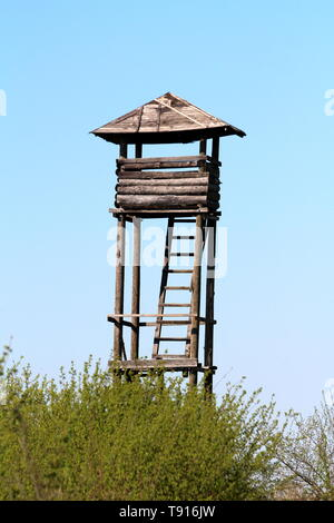 Tall improvised dilapidated vintage wooden hunting observation tower with connected ladders surrounded with dense trees and clear blue sky in back - Stock Photo