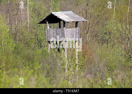 Vintage tall wooden hunting observation tower with improvised ladders surrounded with high dense trees and forest vegetation on warm sunny spring day - Stock Photo