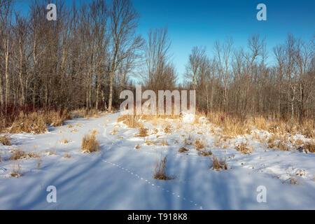 Fox tracks through the snow on Barrie Island, Manitoulin Island, Ontario, Canada - Stock Photo
