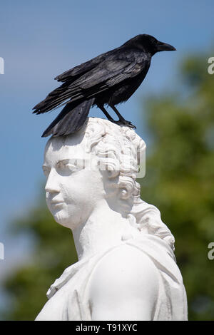 Karlsruhe, Germany. 16th May, 2019. A crow sits in sunny weather on the Schlossplatz upside down on the head of a statue. Credit: Fabian Sommer/dpa/Alamy Live News - Stock Photo