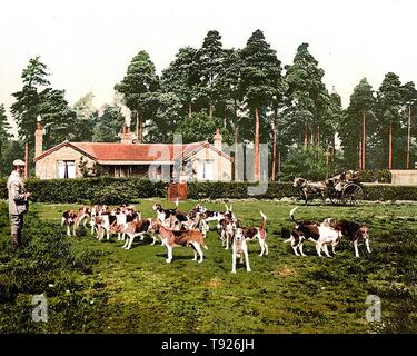Drag Hounds, Royal Staff College, Camberley, Surrey, England. - Stock Photo