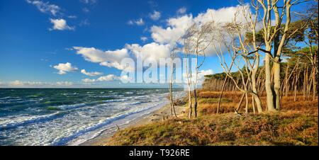Stormy weather at the west beach in autumn, Windfluchter, Peninsula Darss, Fischland-Darss-Zingst, Western Pomerania Lagoon Area National Park - Stock Photo