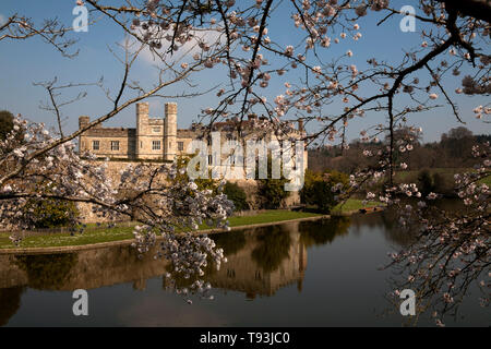 blossom and moat leeds castle maidstone kent england