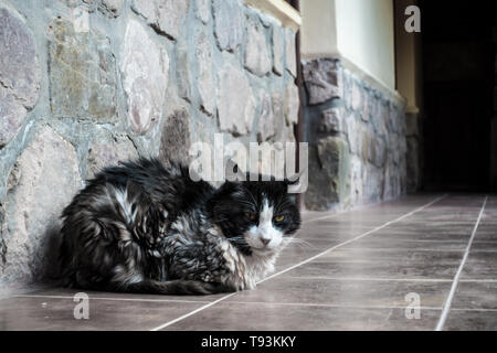Cat lieing on the veranda, in the north of Argentina. - Stock Photo