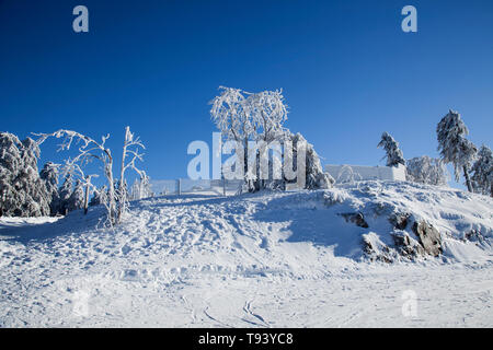 Winter landscape with snowy fir trees on the summit of Wurmberg-mountain, Lower Saxony Harz National Park, Braunlage, Germany - Stock Photo