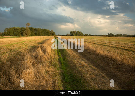 Road through the cut fields, trees on the horizon and evening clouds on the sky - Stock Photo