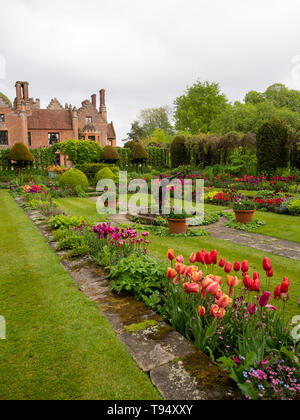 Portrait view:Chenies Manor House and Sunken garden in May with vivid tulip varieties on one side of the lawn; vibrant deep pink, carmine and peach. - Stock Photo