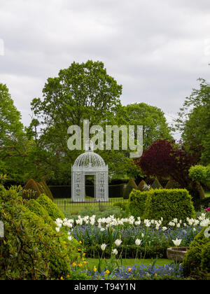 Chenies Manor Gardens, Parterre with White Pagoda bordered by White Tulip Triumphator Portrait view with tall trees, topiary and pastel blue sky. - Stock Photo