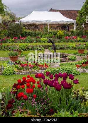 Chenies Manor House Sunken garden in May with vivid pink and purple tulips with the tearoom and marquee, cloudy sky; ornamental pond and sculpture. - Stock Photo