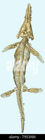 Illustration of an ichthyosaur (Ichthyosaurus platydon) from Louis Figuier's The World Before the Deluge, 1867 American edition.  Figuier describes the ichthyosaur as having ''the snout of a porpoise, the head of a lizard, the jaws and teeth of a crocodile, the vertebrae of a fish, the sternum of the ornithorhynchus, the paddles of a whale, and the trunk and tail of a quadruped.'' - Stock Photo