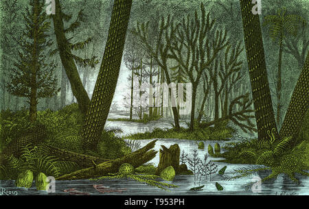 Ideal view of a marshy forest of the Coal Period, from Louis Figuier's The World Before the Deluge, 1867 American edition. On the right are Lepidodendron and Sigillaria trees, with an arborescent fern rising between them. On the left are another Sigillaria, a Sphenophyllum and a conifer. Other visible plants are Calamites, Asterophyllites and herbaceous ferns. A few fish and the primitive amphibian Archegosaurus are in the water. - Stock Photo