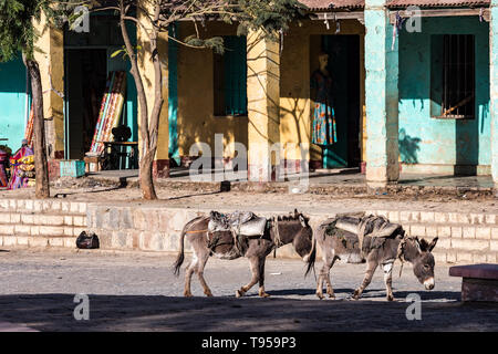 Africa, Ethiopia, Axum, donkeys in the ruins of the baths of the Queen of Saba - Stock Photo