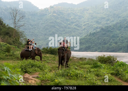 Tourist group rides through the jungle on the backs of elephants. Laos. Luang Prabang. - 15 January 2019 - Stock Photo