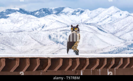 Clear Panorama Roof of a building coated with snow with an owl sculpture viewed in winter - Stock Photo
