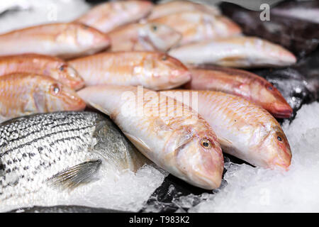 Counter with fresh fishes in ice - Stock Photo