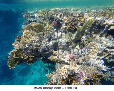 coral reef, red sea, marsa alam - Stock Photo