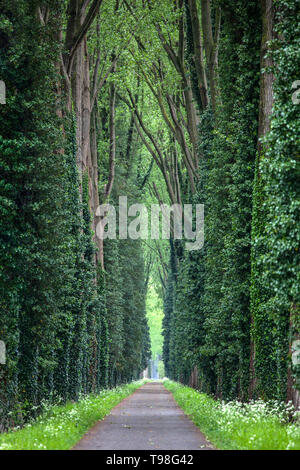 Narrow forest road with tall green deciduous trees with thick trunks around. - Stock Photo