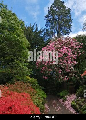 Beautiful Trees in Bloom at Bonant Gardens National Trust North Wales - Stock Photo