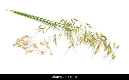 Avena fatuaor wild oat. Isolated on white background. - Stock Photo