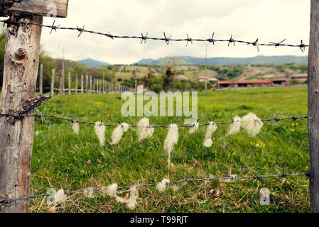 Animal farm in the country  Wooden fence with barbed wire with sheep wool on it Selective focus - Stock Photo
