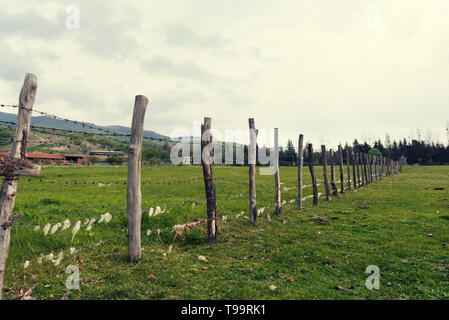 Wooden fence with barbed wire with sheep wool on it in an animal farm in the country Selective focus - Stock Photo