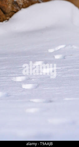 Vertical Nature scenery with a close up of animal tracks on powdery snow in winter - Stock Photo