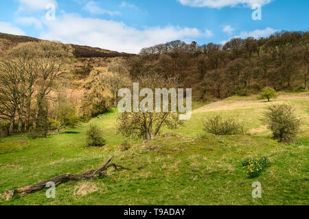 Beautiful walk through the North York Moors with trees, grasses, and rolling landscape in spring in Hole of Horcum, Goathland,Yorkshire, UK. - Stock Photo