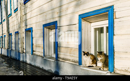Two cute cats sitting on a window sill of a Russian house in Suzdal, Russia - Stock Photo