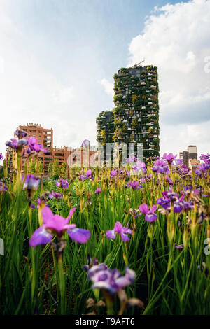 Iris flowers in the garden against Bosco Verticale or vertical forest apartment buildings towers in Porta Nuova district, Milano, Italy - Stock Photo