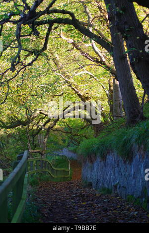 Gnarly Tangle Arching Tree Trunks along River Don Path. Seaton Park, Old Aberdeen, Scotland, UK. - Stock Photo