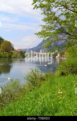 Beautiful spring view to the Adda river, flowing from the lake Como, the town of Lecco, green bank with trees, nature and two white swans swimming. - Stock Photo