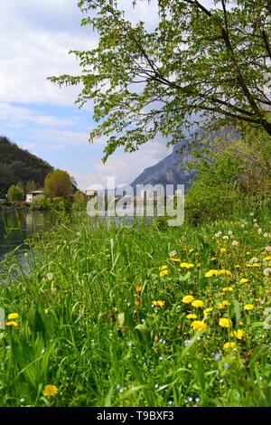 Beautiful spring view to the Adda river, flowing from the lake Como, the town of Lecco and a spring meadow with flowering yellow dandelions and trees. - Stock Photo