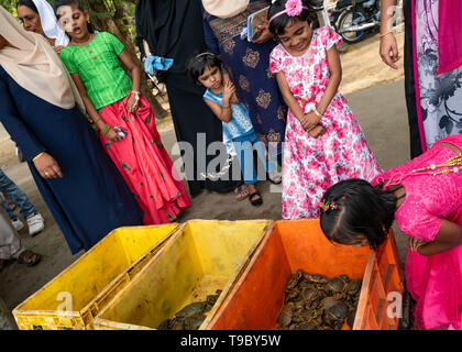 Horizontal view of children squirming at the fish market in Fort Kochi, India. - Stock Photo