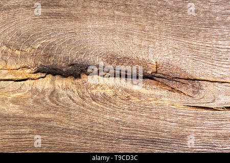 Aged wood, bog oak texture with knot. Natural wood background. - Stock Photo