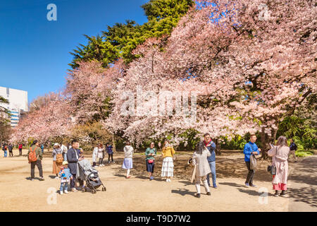 4 April 2019: Tokyo, Japan - Cherry Blossom in Shinjuku Gyoen Park in spring, with visitors taking photos and selfies. - Stock Photo