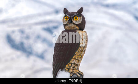 Clear Panorama Snowy roof of a building with an owl sculpture on top viewed in winter - Stock Photo