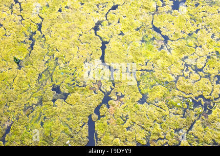 Detail of standing water in a lake - Stock Photo