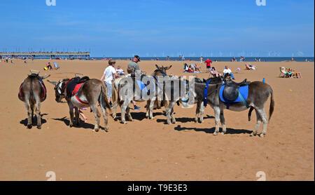 Donkeys on Skegness Beach, Lincolnshire, UK - Stock Photo