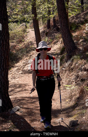 woman doing trekking on the paths of a pine forest on the side of a mountain - Stock Photo