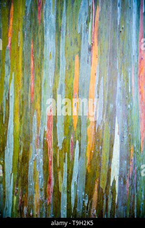 Abstract full frame background of the colorful peeling bark of a rainbow eucalyptus tree - Stock Photo