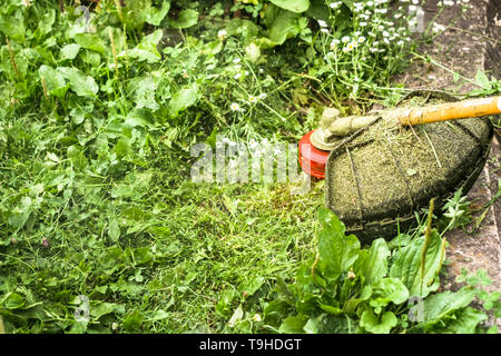 The brushcutter in action, head with nylon line cutting grass and dandelions in to small pieces - Stock Photo