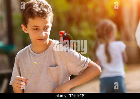 teenager boy in zoo feeding ara parrots sit on his shoulder - Stock Photo
