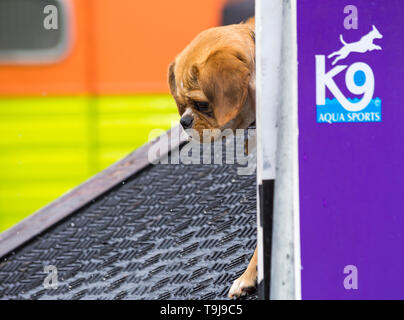 Lymington, Hampshire, UK. 19th May 2019. A fabulous event for dogs of all shapes, breeds and sizes on the last day of the inaugural Dogstival event at Pylewell Park Estate, Lymington, New Forest. Credit: Carolyn Jenkins/Alamy Live News - Stock Photo