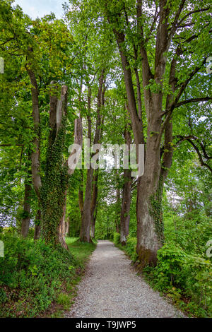 Avenue in spring at Murnau am Staffelsee, Upper Bavaria, Bavaria, Germany, Europe - Stock Photo
