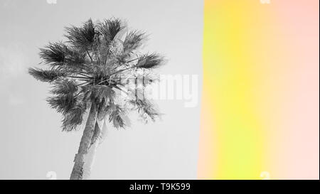 Black and white one palm tree with abstract leak light effect against sky background with trendy glitch effect, template with copy space - Stock Photo