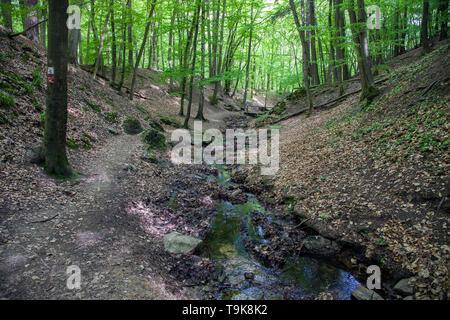 The stream Hasselbach at the hiker trail Steckeschlääfer-Klamm, Binger forest, Bingen on the Rhine, Rhineland-Palatinate, Germany - Stock Photo