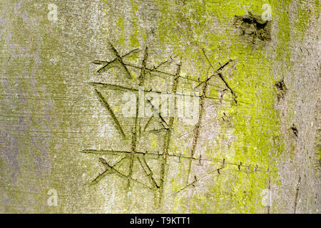 Notched beech tree bark with the game noughts and crosses, boter kaas en eieren, tic-tac-toe, in The Netherlands. - Stock Photo