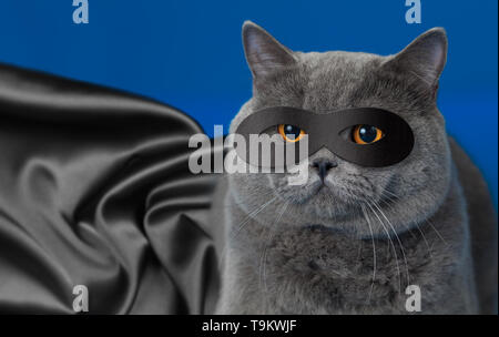 Fat cat in superhero mask - Stock Photo