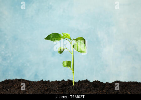 Seedling in black soil against light background, space for text. Environmental protection - Stock Photo